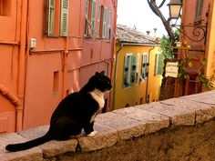 Cat on a wall (by Marite2007)
