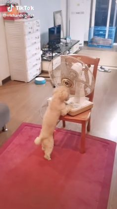 A Smart dog. Silly Dogs, Cute Funny Dogs, Cute Funny Animals, Funny Babies, Cute Baby Animals, Animals And Pets, Video Chat, Funny Parrots, Funny Dog Videos