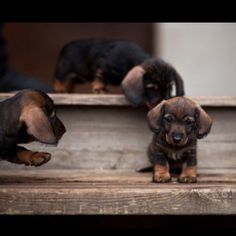 Too cute, puppies. Repinned from reddit.com