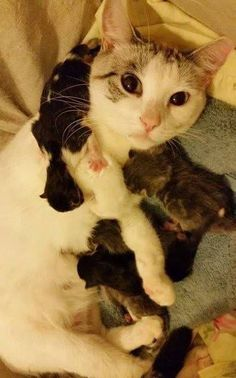 Hello :p #cats #love #instagood #photooftheday #beautiful #cute #happy #fashion #followme #me #follow