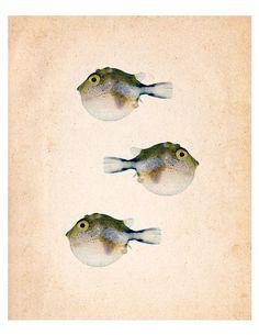 Colorful Fish 11 Vintage Illustration Wall Decor by SeashoreDecors, $9.95