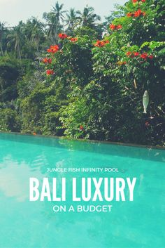 Experience Bali luxury on a budget at Jungle Fish infinity pool