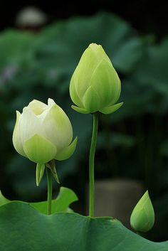 ** Green & white