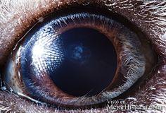 Suren Manvelyan es un fotógrafo armenio extremadamente creativo, en esta ocasión nos muestra los ojos de los animales desde una perspectiva increíb...