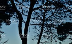 Moon in the Tree royalty-free stock photo Tree Silhouette, Photo Tree, In The Tree, Royalty Free Stock Photos, Moon, Frame, Vectors, Photography, Illustrations