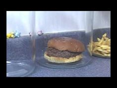 The Decomposition Of McDonald's Burgers And Fries. 10 weeks and the fries show no sign of decomposing.  what is that doing to our bodies?