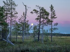 Night Skies, Finland, Natural Beauty, Scenery, Sky, Sunset, Serendipity, Watercolour, Nature