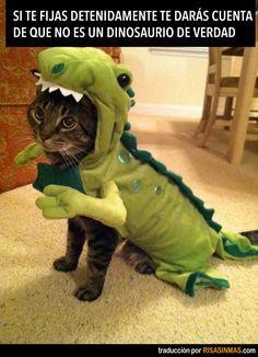 Si te fijas detenidamente verás que no es un dinosaurio de verdad.