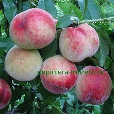 Pepiniera Mitreni - Piersic Peach, Decoration, Ideas, Lawn And Garden, Decor, Peaches, Decorations, Decorating, Thoughts