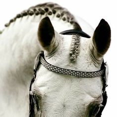 Beautiful Horse from Peter Stoop Photography Horse Mane, Horse Girl, Andalusian Horse, Friesian Horse, Arabian Horses, Horse Photos, Horse Pictures, Pretty Horses, Beautiful Horses