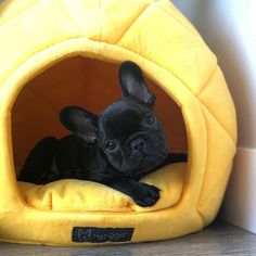 """Check out our site for more details on """"bulldog puppies"""". It is a great place for more information. Super Cute Puppies, Cute Dogs And Puppies, Baby Dogs, Pet Dogs, Doggies, Cute French Bulldog, French Bulldog Puppies, French Bulldogs, French Bulldog Clothes"""