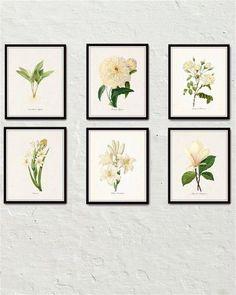 White Botanical Print Set No. 6 - Giclee Canvas Art Prints