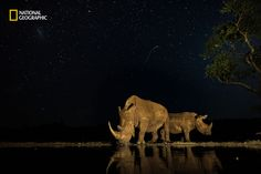 The 2016 National Geographic Nature Photographer of the Year Contest (15…