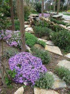 jardin méditerranéen avec des Phlox douglasii, herbes aromatiques et arbres