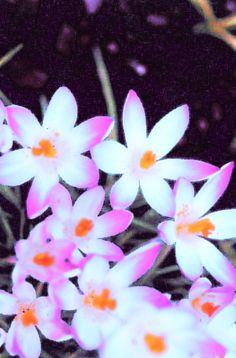 Floral Digital Print