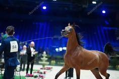 Arabian horse world championship, Nord Villepente in Paris. Photographers Near Me, Horse World, Paris City, World Championship, Editorial Photography, Horses, Stock Photos, Animals, Animales