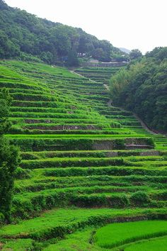 斜面が急なで数も多いので迫力満点。中山千枚田の観光スポット。