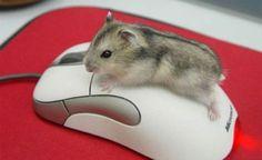 7 сюрпризов компьютерной мыши !