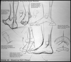 Analytical Figure Drawing SP08: Week 10 - Hand & Feet Notes