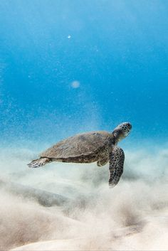 CLICK TO FIND OUT HOW YOU CAN SWIM WITH THE TURTLES