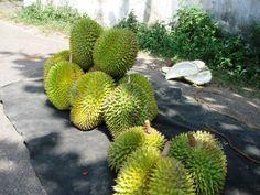"""Дурианы. Продают их, как правило, только на улице из-за их весьма своеобразного """"аромата"""" (Шри-Ланка) Fruit, Food, Meals"""