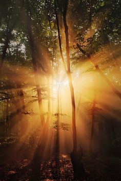 "Dancing Light - <a href=""https://www.facebook.com/pages/Landscape-Photography-by-Kilian-Schoenberger/304631876263547"">LANDSCAPE PHOTOGRAPHY facebook</a>  Forest Sunrise"