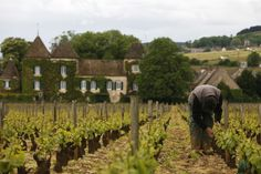 View Slideshow Request to buy this photo Ed Alcock Visitors can still see the vineyards and cellars of the Burgundy region that Thomas Jefferson visited in ...