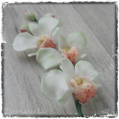 ORCHIDEJ (Orchid) December 25, Orchids, Plants, Love, Lilies, Planters, Plant, Planting, Orchid