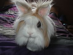 It Takes Bunny a While to Get Ready in the Morning - June 7, 2011