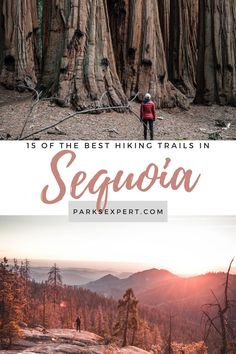 A list of the best hikes in Sequoia National Park, including everything from the High Sierras to the world's largest trees, and a list of every park trail! Best Hikes in Sequoia National Park | Best Hikes Sequoia National Park #sequoianationalpark #hiking #california #usa #nationalparks Canyonlands National Park, Sequoia National Park, National Parks Usa, Yellowstone National Park, Petrified Forest National Park, Visit Usa, Park Trails, Best Hikes, California Usa