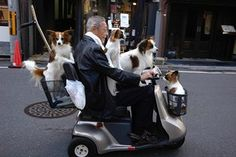 A man on an electric wheelchair with several dogs sitting on and around him