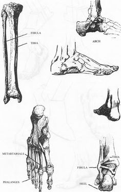 Step omni bd00079im How to Draw Human Legs and Feet Drawing Article