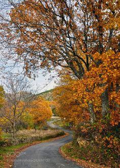 Paseo de otoño by mercedesalvador  Nikon D90 Naturaleza Otoño Colores Paseo Gredos Robles Paseo de otoño... mercedesalvador