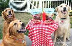Show Your Dog Love with Nudges and a Barbecue Dog Pictures, Pet Photos, Daily Scoop, Insurance Ads, Dog Nutrition, Bar B Q, Dog Rules, Dog Art, Dog Love