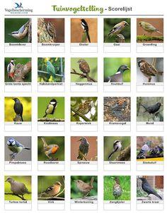 tuinvogellijst