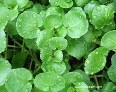 Watercress Can Prevent Us From Cancer and Alzheimer's