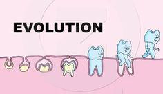 The evolution of teeth!