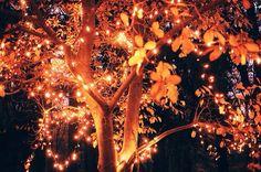 Romantic Autumn Evening