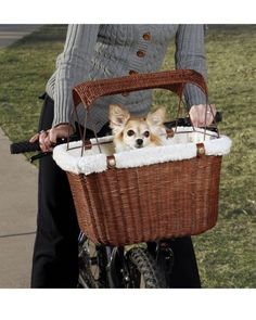 Envisioning new ways to get us both active:  Solvit Tagalong Pet Bicycle Basket, £33.99