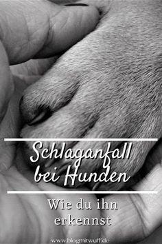 Zum Weltschlaganfalltag am 29.10. möchten wir dir die Symptome eines Schlaganfalls beim Hund näher bringen, damit du im Notfall handeln kannst..
