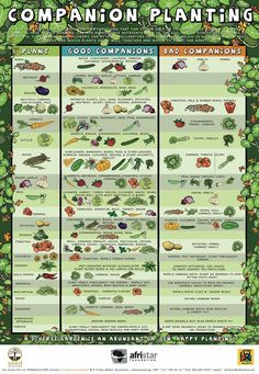 Urban Gardening Ideas Companion Planting Poster - Good info at the bottom on flowers and herbs that benefit food plants. - Beginners Companion Planting Resources for Gardening ~ Free Printable Companion Planting Chart What grows well together Veg Garden, Lawn And Garden, Veggie Gardens, Spring Garden, Raised Vegetable Gardens, Vegetables Garden, Vegetable Garden Layouts, Fruit Garden, Spring Vegetable Garden