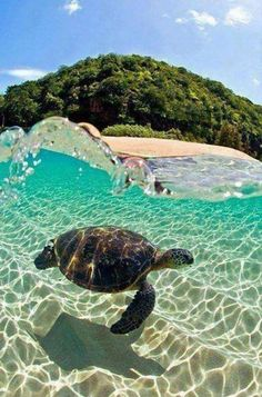 The Caretta-Caretta turtle, Zakynthos Island (Ionian), Greece. Pinner:liv82000