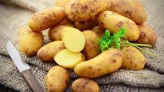 Kartoffel Diät: Kartoffeln sind in Deutschland sehr beliebt. Das macht sich die…