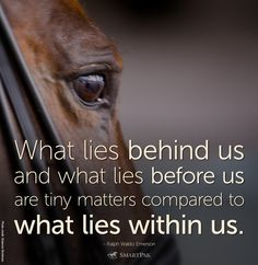 Horse Love Quotes, Inspirational Horse Quotes, Horse Riding Quotes, Love Quotes Funny, Horse Sayings, Girl Sayings, Smile Quotes, Song Quotes, Inspirational Thoughts