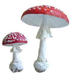 Anne-Lise Koehler, Nature, sculptures... et cinema: Champignons, Mushrooms