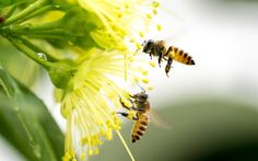If you thought beeless honey was just another bizarre foodie trend, think again. This one affects all of us and we can learn a thing or two from its rise.
