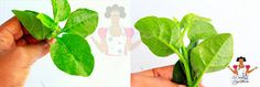Dobbys Signature: Nigerian food blog | Nigerian food recipes | African food blog: Indigenous leafy vegetables and herbs found in Nigeria
