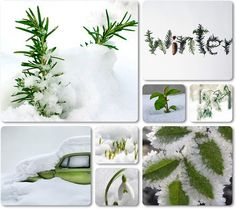 Green in the snow ~ by Audrey T