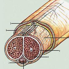 cual es el acido urico normal de una persona valores normales del acido urico en mujeres pie inflamado acido urico