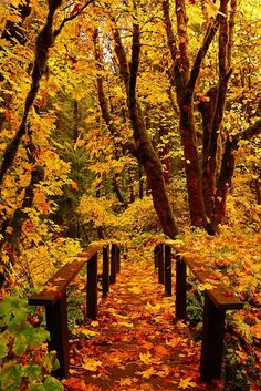 ~~Colored Path | foot bridge blanketed by autumn leaves,Toketee Falls, Oregon by kismetphotos~~